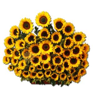 Estoy a quí arreglo floral en girasoles   flor y vida