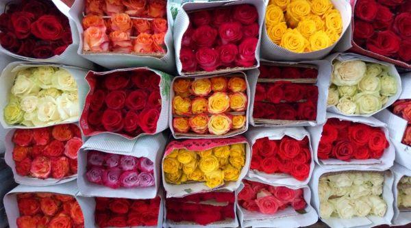Rosa al por mayor productos | flor y vida cali