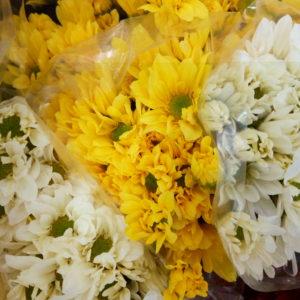 Margaritas al por mayor en cali flores |flor y vida cali