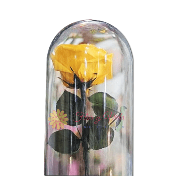 Rosa Inmortalizada o preservada amarilla en cali