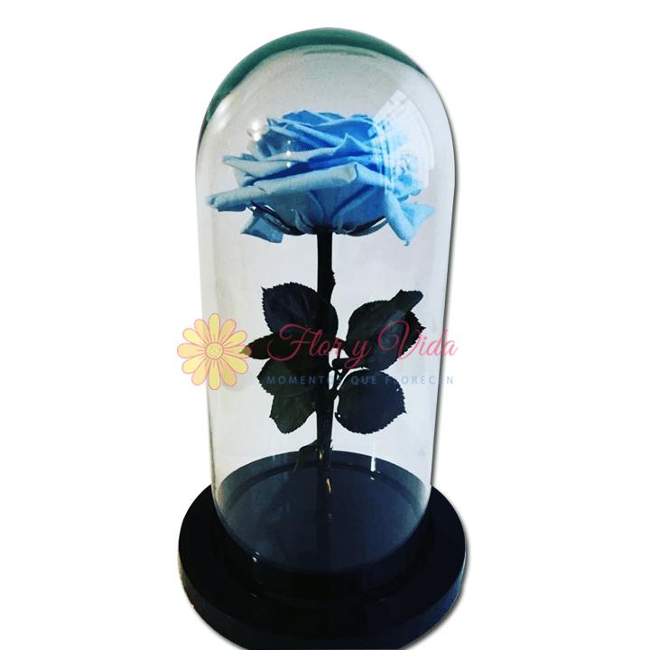 Rosa Inmortalizada o preservada azul cielo en cali