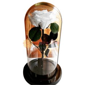 Rosa Inmortalizada o preservada blanca en cali