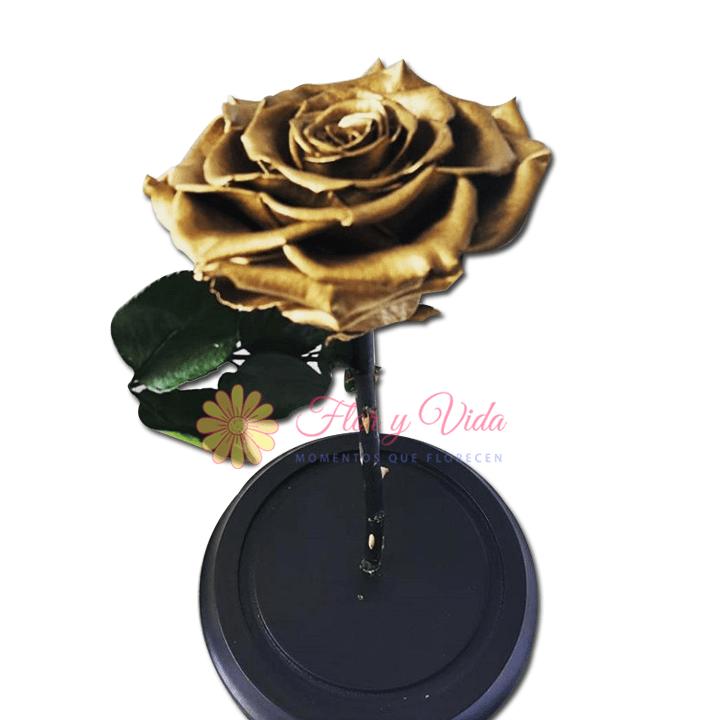 Rosa Inmortalizada o preservada dorada en cali