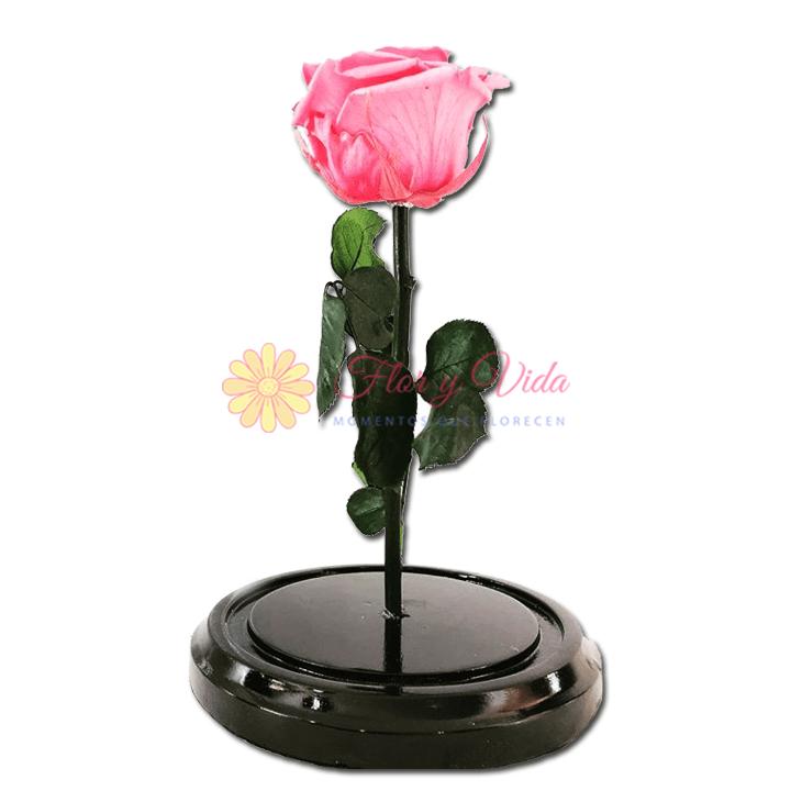 Rosa Inmortalizada o preservada rosada en cali