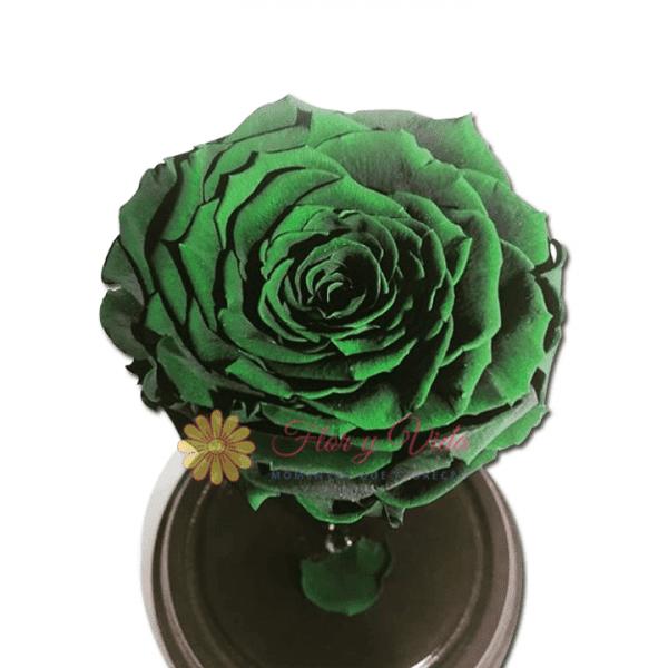 Rosas preservadas o inmortalizadas verde en cali
