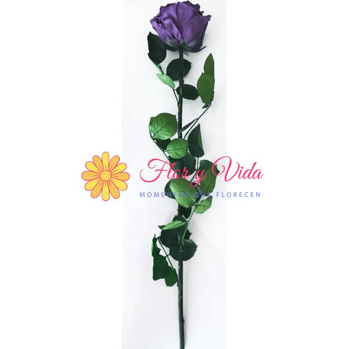 Rosas preservadas o inmortalizadas en cali