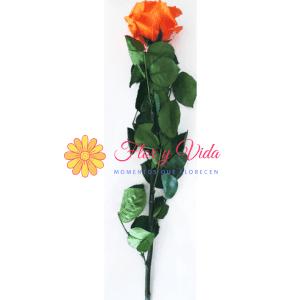Rosa preservada naranja