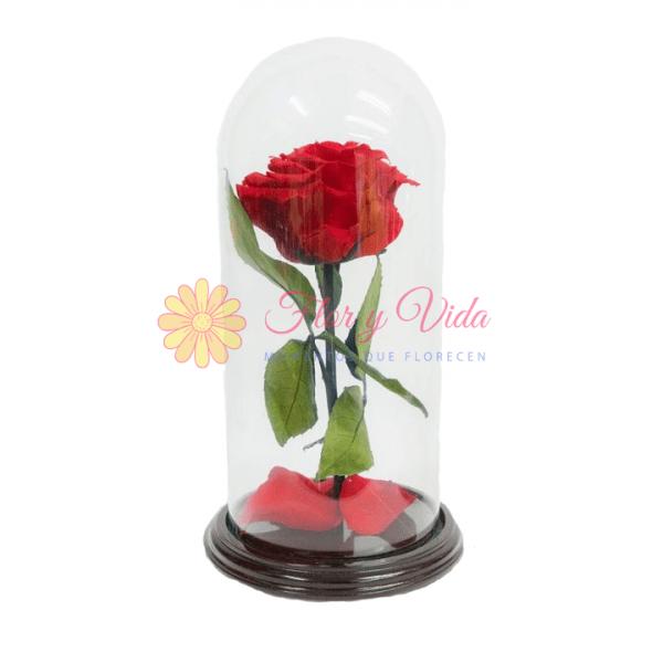 Rosa Inmortalizada roja