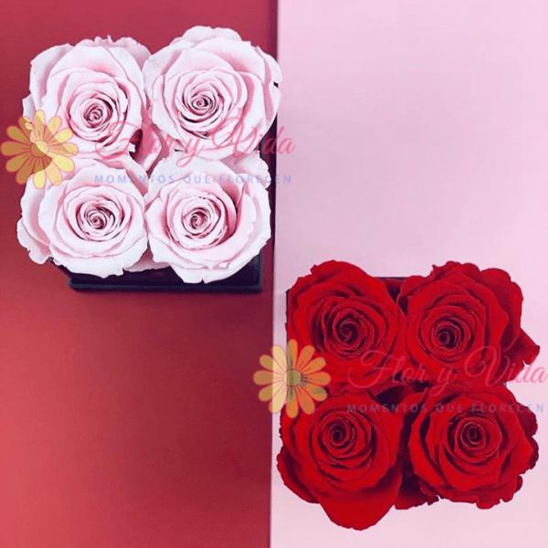 Sección Premium en cali | flor y vida cali